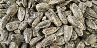 Pericolele consumului de seminte sarate: sunt toxice pentru ficat si cresc tensiunea