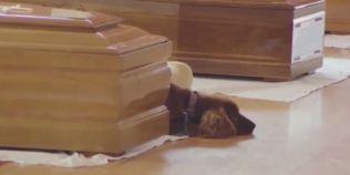 VIDEO Imagine dureroasa in timpul funeraliilor din Italia. Un caine refuza sa plece de langa sicriul stapanului, mort in cutremur