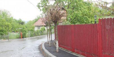 Topul ideilor trasnite ale Doreilor din Primarie: boscheti vopsiti, copaci din ciment, parcuri ale nimanui